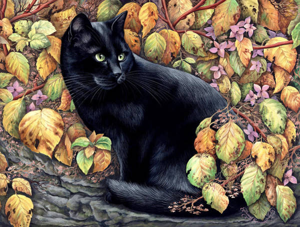 Black Cats Photograph - Autumn Colours by MGL Meiklejohn Graphics Licensing
