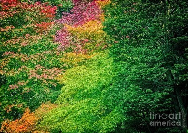 Photograph - Autumn Colors On Acer Tree Leafs by Martyn Arnold