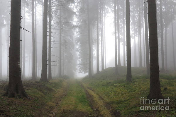Woodland Wall Art - Photograph - Autumn Coniferous Forest In The Morning Mist by Michal Boubin