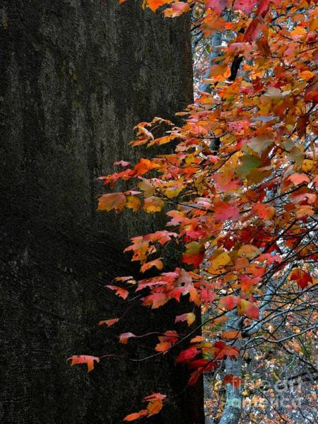 Photograph - Autumn Contrast by Marcia Lee Jones