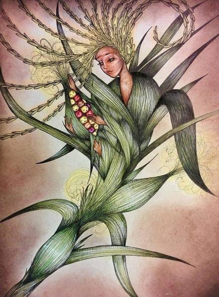 Indian Corn Drawing - Autumn Corn Babies by Summer Porter
