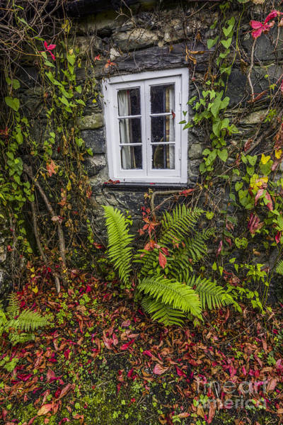 Photograph - Autumn Cottage Window by Ian Mitchell