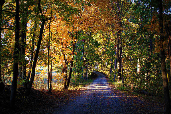 Photograph - Autumn Country Lane by Cricket Hackmann