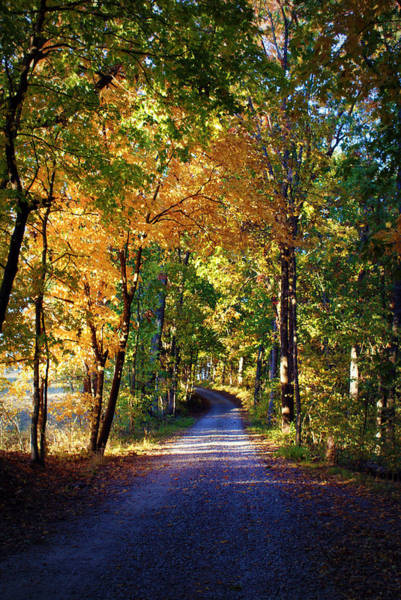 Photograph - Autumn Country Lane II by Cricket Hackmann