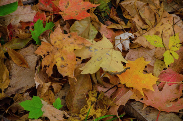 Photograph - Autumn Coverings by Bill Cannon