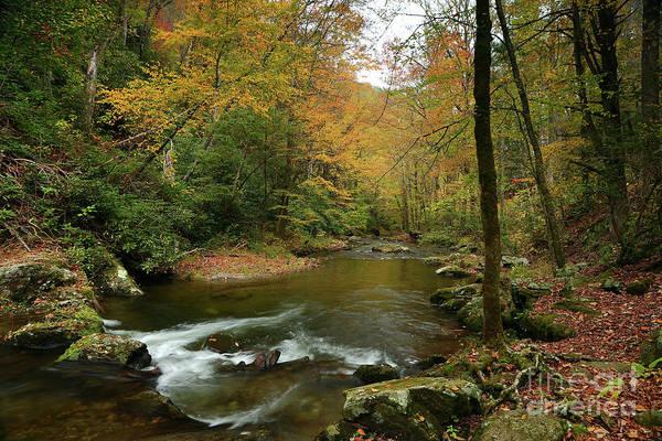 Wall Art - Photograph - Autumn Creek by Rick Mann