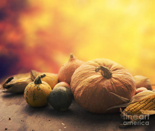 Wall Art - Photograph - Autumn Crops by Jelena Jovanovic