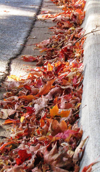 Photograph - Autumn Curb Appeal 2 by Robert Knight