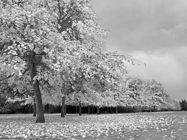 Photograph - Autumn Days In Mono by Gill Billington