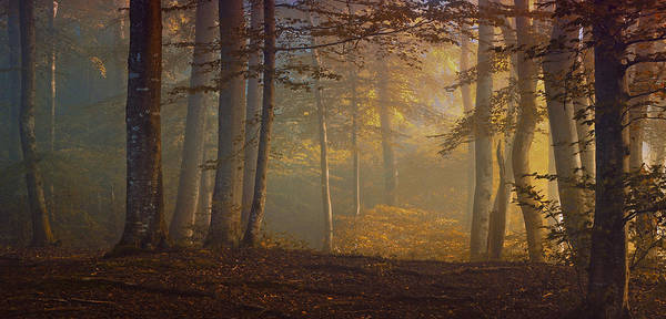 Morning Photograph - Autumn Days by Norbert Maier