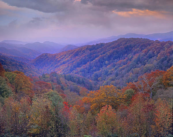 Art Print featuring the photograph Autumn Deciduous Forest Great Smoky by Tim Fitzharris
