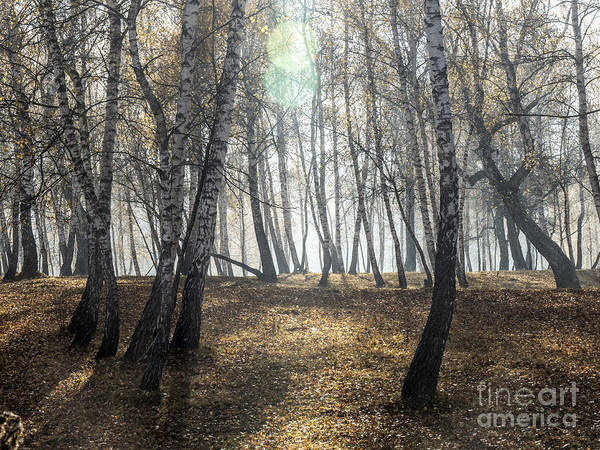 Photograph - Autumn Deep Fog In The Morning Birch Grove by Odon Czintos