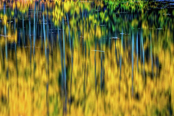 Photograph - Autumn Deep by John De Bord