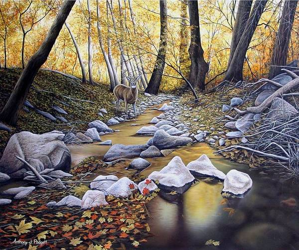 Painting - Autumn Deer by Anthony J Padgett