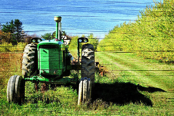 Wall Art - Photograph - Autumn Deere With Wood Grain by Luke Moore