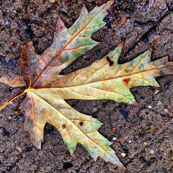 Photograph - Autumn Detail by Cate Franklyn