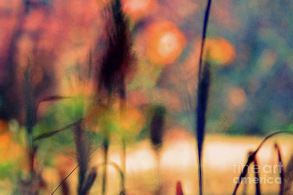 Photograph - Autumn Dreams Abstract by Karen Adams