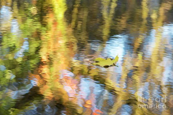 Fallen Tree Photograph - Autumn Drift by Tim Gainey