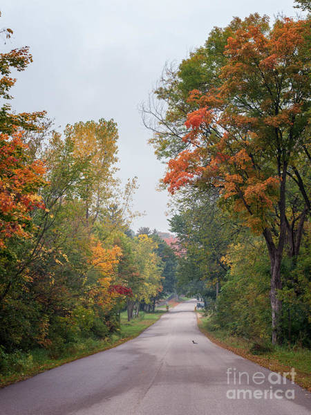 Photograph - Autumn Drive by Kari Yearous