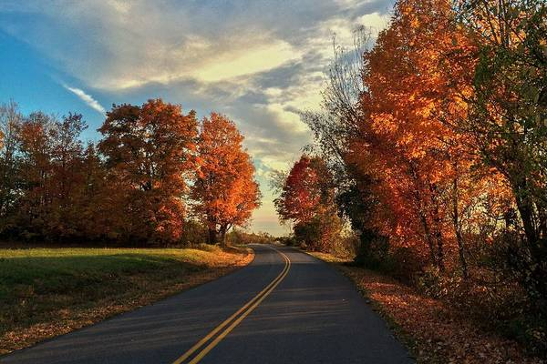 Photograph - Autumn Drive by Kendall McKernon