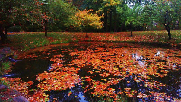 Photograph - Autumn Dusk by Roger Bester