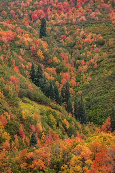 Photograph - Autumn  by Dustin  LeFevre