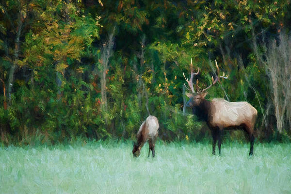 Wall Art - Photograph - Autumn Elk by Lana Trussell