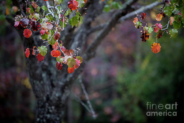 Photograph - Autumn Fade by Dale Powell