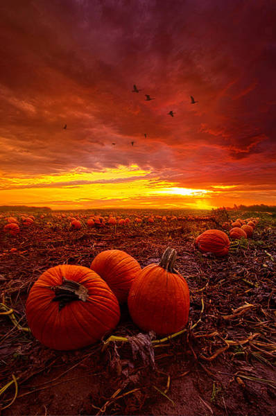Goose Photograph - Autumn Falls by Phil Koch