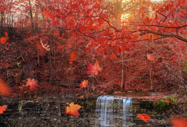 Photograph - Autumn Falls by Tracy Munson