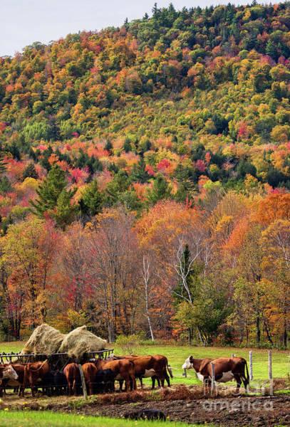 Photograph - Autumn Farm Scene, Bethel, Maine #40193 by John Bald