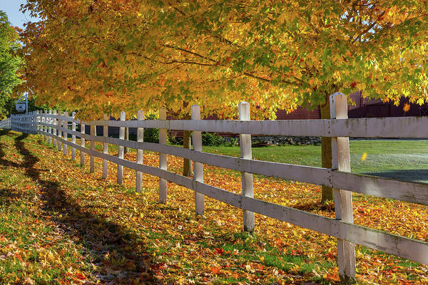 Photograph - Autumn Fence by Bill Wakeley
