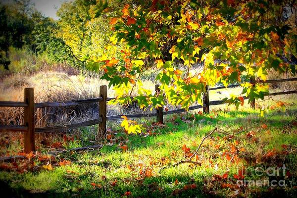 Photograph - Autumn Fence by Carol Groenen