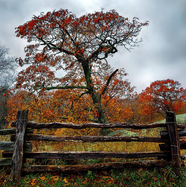 Photograph - Autumn Fenced In by Renee Sullivan