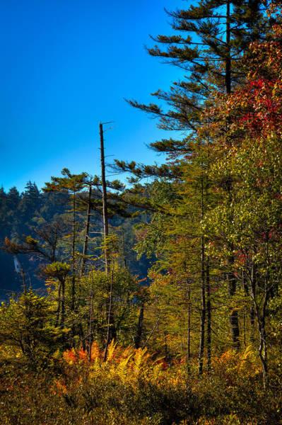 Photograph - Autumn Ferns At Cary Lake by David Patterson