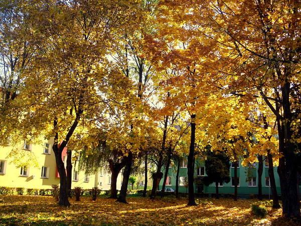 Gorecki Photograph - Autumn Festival Of Colors by Henryk Gorecki