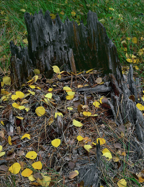 Photograph - Autumn Finale by Paul Breitkreuz