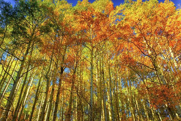 Photograph - Autumn Fire by John De Bord
