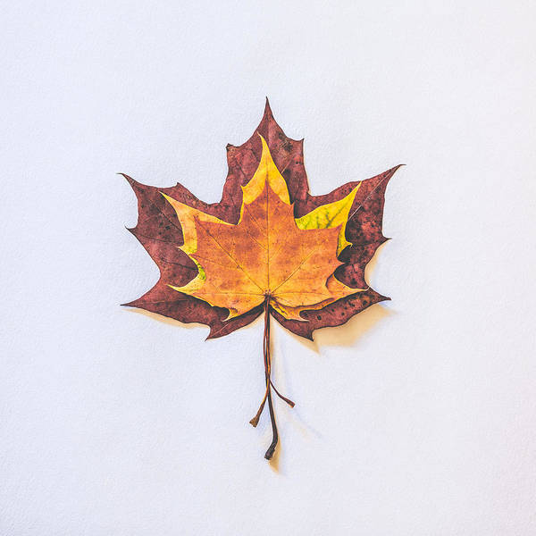 Leafs Wall Art - Photograph - Autumn Fire by Kate Morton