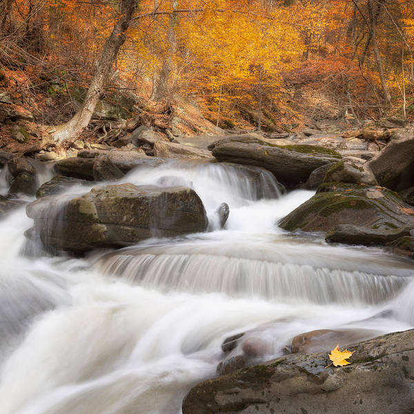 Catskills Photograph - Autumn Fire Square by Bill Wakeley