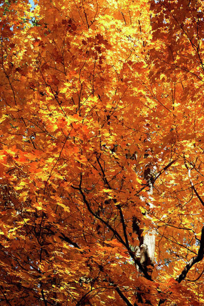 Photograph - Autumn Flame by Cate Franklyn