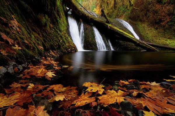 Autumn Flashback Art Print