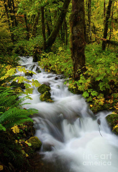 Wall Art - Photograph - Autumn Floodwaters by Mike Dawson