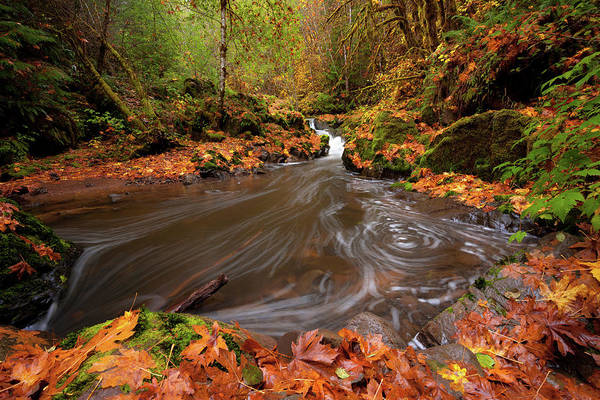 Autumn Flow Art Print