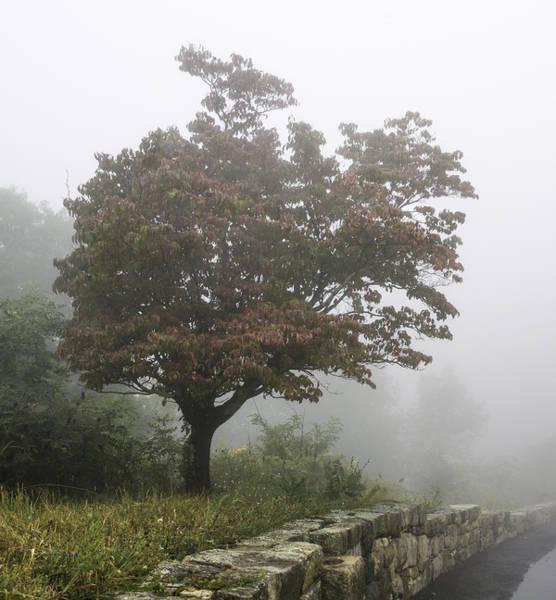 Wall Art - Photograph - Autumn Fog #2 by Edd Fuller