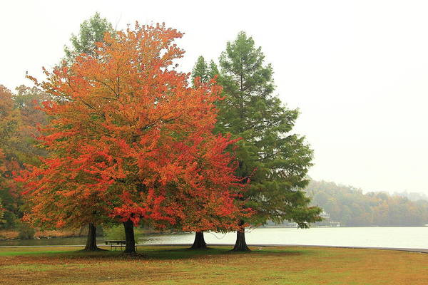 Photograph - Autumn Fog by Allen Nice-Webb