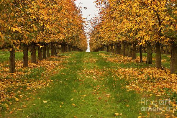 Photograph - Autumn Foliage by Heiko Koehrer-Wagner
