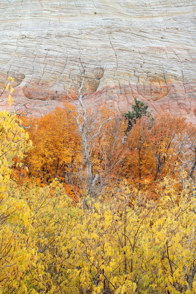 Photograph - Autumn Foliage In Zion National Park by Pierre Leclerc Photography