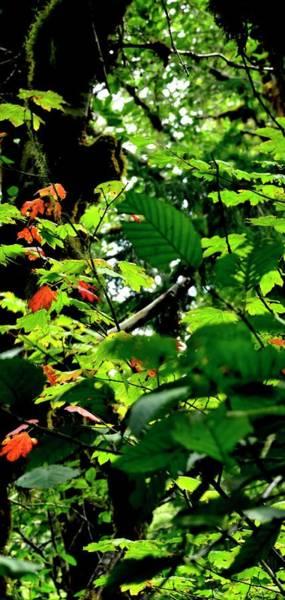 Photograph - Autumn Foliage by Jerry Sodorff