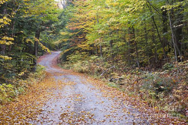 Photograph - Autumn Foliage - Sandwich Notch Road New Hampshire  by Erin Paul Donovan